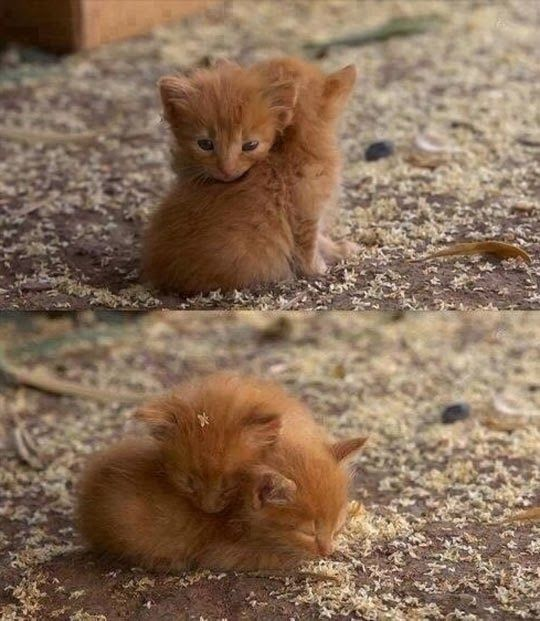 Everything is going to be okay… <3: Cats, Animals, Cuteness, Sweet, Hug, Adorable, Baby, Kittens, Kitty