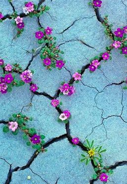 flowers in cracks.......................Search here for something amazing: http://visittourtraveling.blogspot.com/ https://www.facebook.com/pages/Visit-Tour-and-Traveling/714354651941297?ref=hl: Flowers Growing, Nature Flowers, Flowers Nature, Flowers In