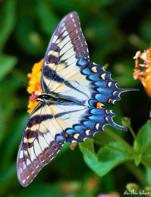 For beauty being the best of all we know,  Sums up the unsearchable and secret aims Of nature: Butterfly, Butterflies Dragonflies Moths, Butterfly, Sweet, Beautiful Colors, Butterfly Moth