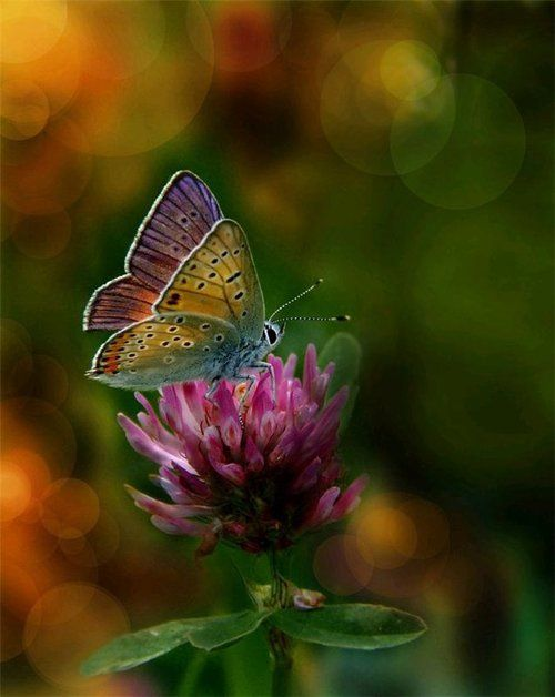 God wields a magnificent paint brush.: Beautiful Butterflies, Nature, Color, Flutterby, Flower, Animal