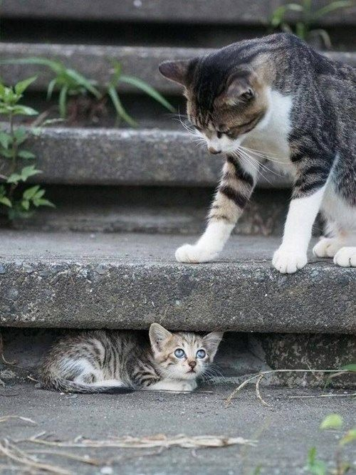 Hiding From Mom -- When you're up there lording it over others on the stairs, always remember someone could be hiding underneath.: Cats, Kitty Cats, Adorable Animals, Hiding, Pet, Kittens, Kitties, Photo, Mom