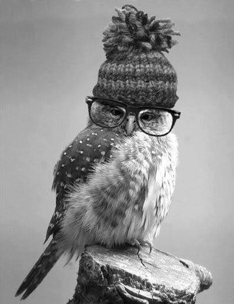 Hipster owl. I may need to print this out for the playroom or nursery! So cute: Animals, Hipster Owl, Wise Owl, Owl Obsession, Cute Owl, Hipsterowl, Birds, Owls