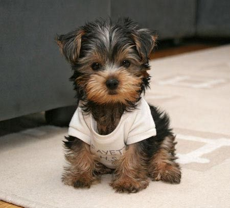 How do I look?: Puppies, Animals, Dogs, So Cute, Pets, Puppys, Baby