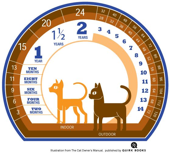 How to Calculate A Cats Age in Cat Years | Catster ☮❥•.¸¸☮❥•.¸¸☮❥•.¸¸☮❥•.¸¸☮❥•.¸¸: Cats, Cat Age, Pets, Outdoor Cat, Animal, Human Years