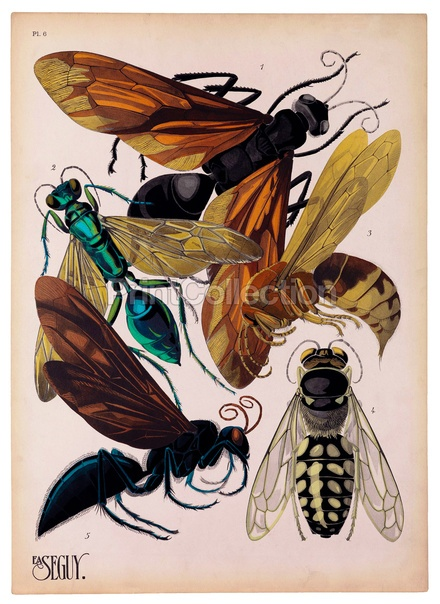 Insects, Plate 6: Scientific Illustration, Bugs, Art, She, Insects, Design