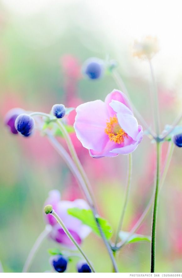 Inspired By: Photographer Dan | Creature ComfortsCreature Comforts: Pastel, Pink Flowers, Flora, Colors, Beautiful Flowers, Color Palette, Garden, Photo