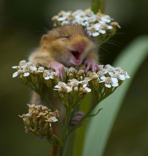 It is impossible to look at this and not have a good day :-): Animals, So Cute, Happy, Funny, Adorable, Things, Smile, Photo, Flower