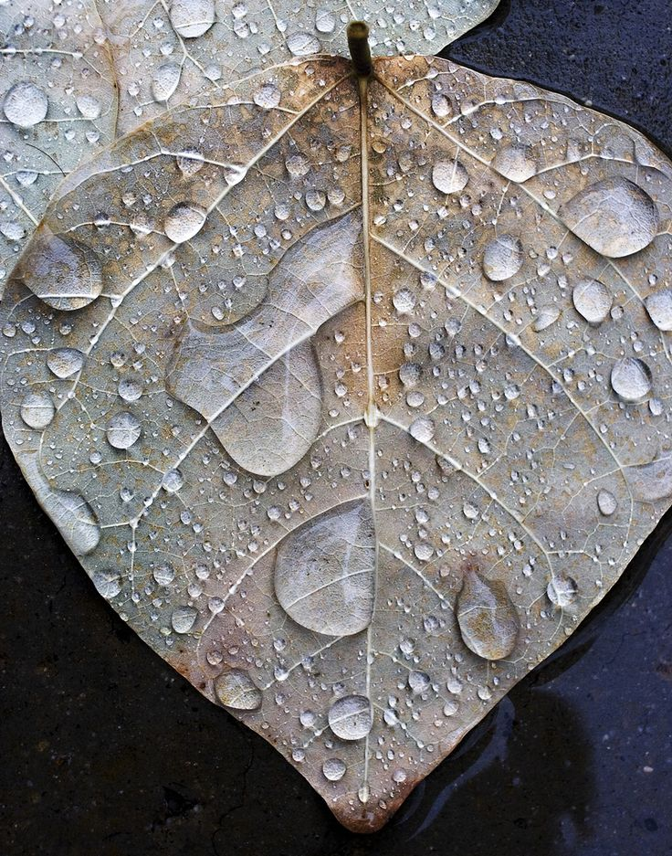 Leaf in Rain  By alan_sailer☆: Water Drops, Dew Drop, Rain Dew, Dewdrops, Rain Drops, Rain Rain, Rainy Days, Natural Beauty