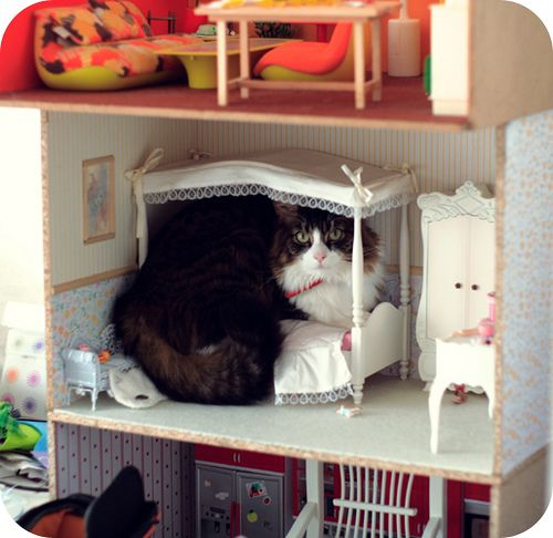 "Look who i found in the dollhouse! ~ ""She chose the bed (I always said that this cat was very clever), not the living room or the bedroom floor, THE bed!!"": Cats, Kitty Cat, Barbie, Dollhouses, Doll Houses, Silly Cat, Animal"