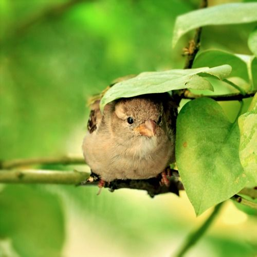 me. little bird. hiding from the world. ducking for cover. vulnerable. scared. alone but still able to chirp.: Animals, Sweet, Nature, Shelters, Birdie, Beautiful Birds, Photo, Rain