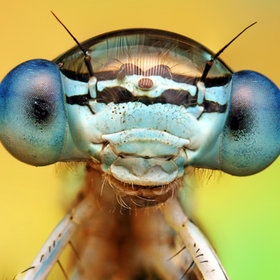 Not often a close up of an insect can be called cute... But this guy is pretty cute!  Photo by Ondrej Pakan: Macros, Macro Photography, Ondrej Feed, Dragonfly, Insects, Close Up, Eye, Animal