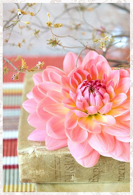 #patternpod #beautifulcolor #inspiredbycolor: Pink Flowers, Color, Dahlias, Book, Beautiful Flowers, Flower Power, Pretty Flower, Garden, Floral