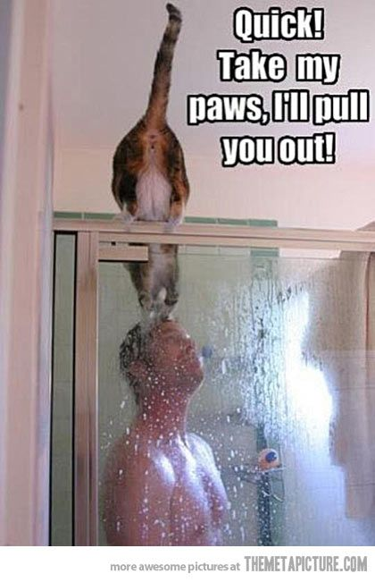 Quick! Take my paws, I'll pull you out! #cat #man #shower: Funny Animals, Funny Cats, Funny Stuff, Funnies, Shower, Humor, Kitty, Cat Lady