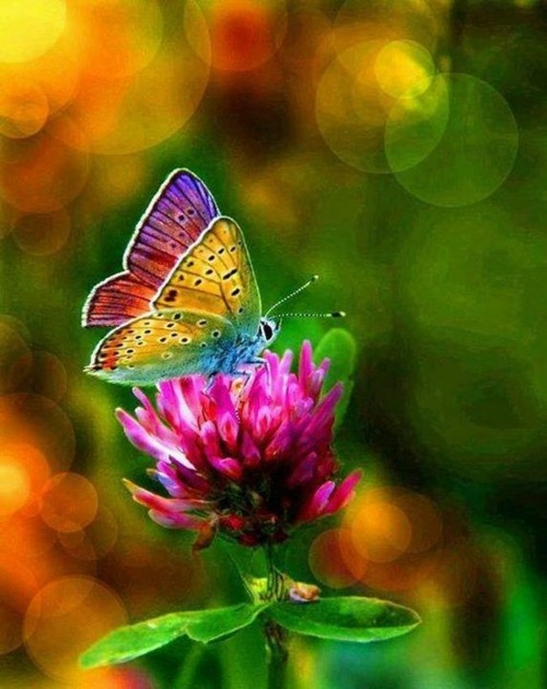 Rainbow Butterfly: Beautiful Butterflies, Animals, Nature, Colors, Rainbows, Beauty, Flowers, Moth