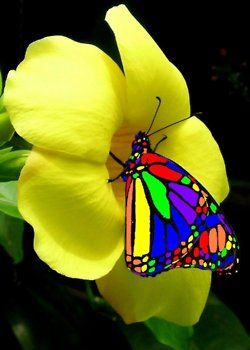 Rainbow Butterfly.  It sometimes amazes me that nature creates this kind of color in it's creatures.: Beautiful Butterflies, Nature, Color, Flutterby, Flowers, Yellow Flower, Animal