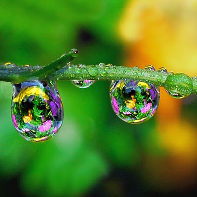 Raindrops Reflecting Pink, Yellow and Pink Flowers: Water Drops, Nature, Raindrop, Dewdrops, Dew Drops, Water Droplets, Photography, Rain Drop