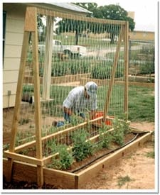 raised bed gardening: Butter Beans, Small Vegetable Garden Ideas, Raised Beds, Gardening Ideas, Outdoor, Garden Beds, Bed Gardening Love, Beans Raised