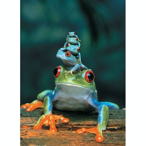 Red Eyed Tree Frog Puzzle 1000 pcs - Grand River Toys - Canada's #1 Online Toy Store: Animals, Nature, Tree Frogs, Creature, Treefrog, Baby Animal, Families, Reptile