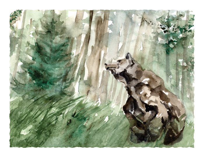 Roderick MacIver   WATERCOLOR: Grizzly Wonder, Dance Art, Art Studios, Roderick Maciver, Heron Dance, Maciver Watercolor, Maciver Arts, Limited Edition