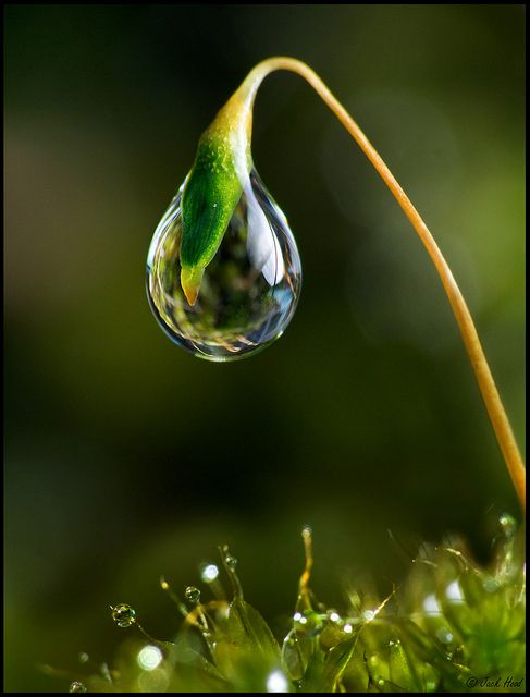 Single Droplet On Moss by Jack Hood, via Flickr: Macro, Water Drops, Nature, Waterdrop, Dew Drops, Dewdrop, Photo, Water Droplets, Rain Drop