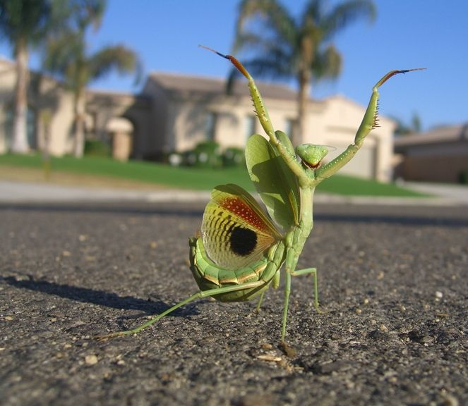 so happy!: Animals, Nature, Funny, Insects, Photo, Praying Mantis