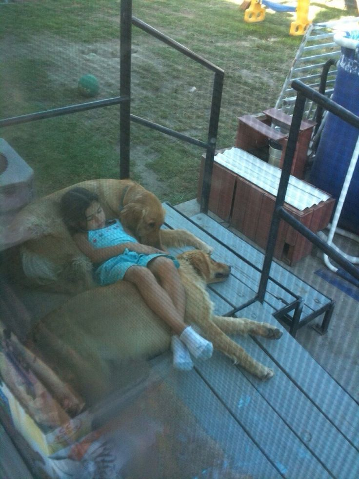 Someone's adorable golden retrievers relaxing with their sweet girl: Nap Time, Animals, Dogs, Best Friends, Golden Retrievers, Funny Pictures, Thought, Kid
