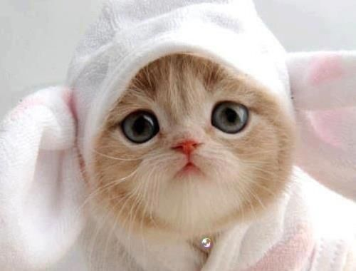 Sweety baby: Cats, Animals, Cuteness, Sweet, Pets, Adorable, Bunnies, Kitty, Cute Kittens