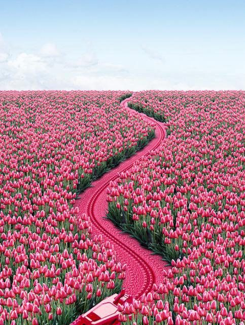 The yellow brick road takes you to the City of Oz. This hot pink brick road takes you to RuPaul's house.: Field, Color, Beautiful, Road, Places, Flowers, Pretty, Pink Tulips