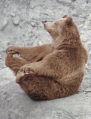 This just makes me smile :): Baby Pose, Animals, Bears, Funny, Yogi Bear, Smile