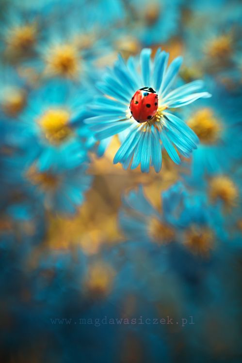Turquoise flower - colour inspiration for  Latch Farm Studios http://www.facebook.com/LatchFarmStudios ladybird: Blue Flowers, Nature, Color, Ladybugs, Ladybird, Lady Bugs, Photo, Animal