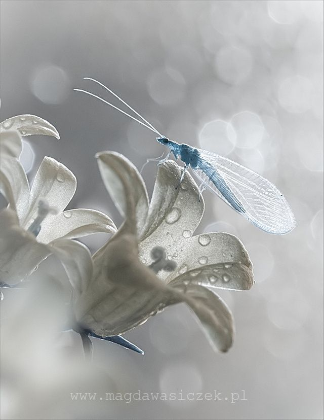 Wildlife photos that blur the line between reality and fantasy: Magda From Czek, Nature, Color, Beautiful, Flowers, Photo, Animal, Dragonflies