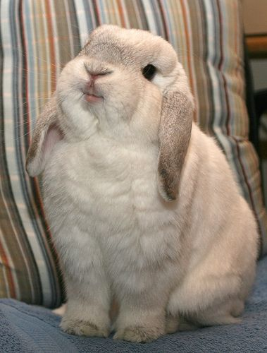 100 Pictures Of Rabbits To Bring You Good Luck For The Lunar New Year: Animals, Rabbits, Happy Bunny, Pets, Smile, Bunnies