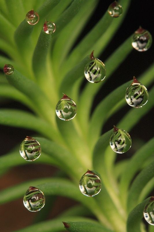 24 Extraordinary Moments of Rain and Dew Photography-if i get to it I'd like to take a shot at drawing water and maybe find a spot for water in my abstract drawing: Water Drops, Waterdrop, Dew Drops, Rain Drops, Dewdrop, Photo