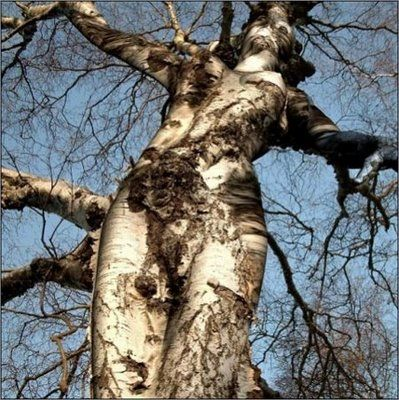 Amazing Trees - Unusual Trees from around the World: Photos, Mothernature, Stuff, Art, Beautiful, Trees, Things, Mother Nature