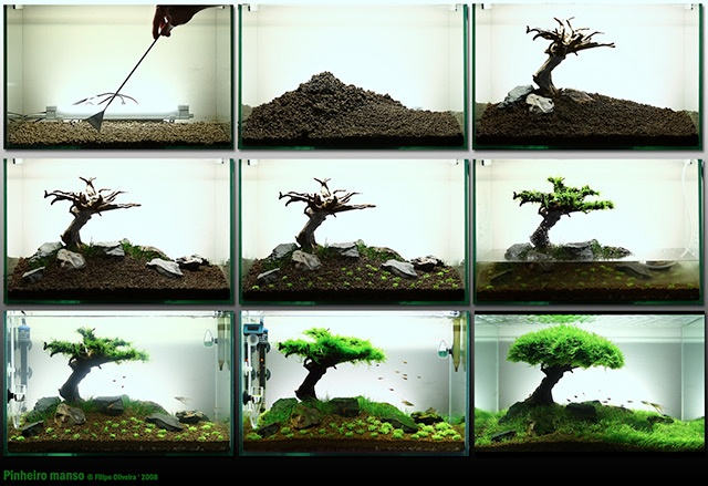 Aquascaping, there is a website for this if your interested too.: Tree, Fish Tanks, Fishtanks, Aquariums, Aquarium Ideas, Aquascape, Aquascaping, Bonsai