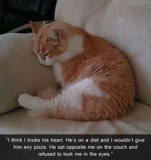 AWE!!!: Cats, Funny Animals, Diet, Funny Pictures, Crazy Cat, Poor Kitty, Humor, Poor Baby