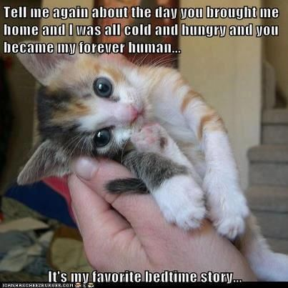 Awwhh.  It's my favorite story too.: Cats, Animals, Sweet, Pets, Funny, Kittens, Kitty