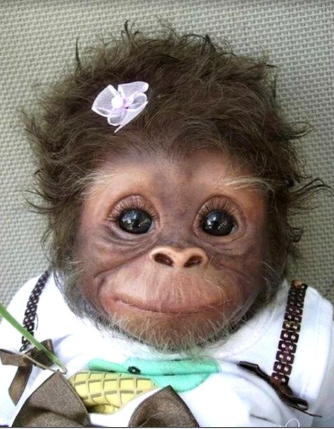 Baby Monkey - 38 Cute Baby Animals: Babies, Animals, Sweet, So Cute, Pet, Funny, Adorable, Baby Monkeys