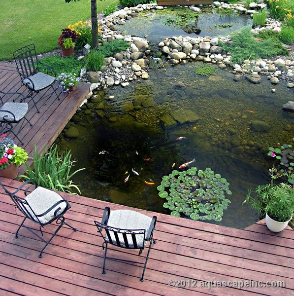 Backyard deck is cantilevered over water garden for ideal for Water plants for koi pond