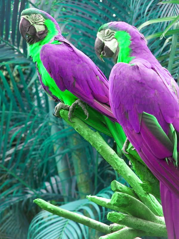 Beautiful birds! Such vibrant colours! :): Purple Bird, Beautiful Colors, Green Parrots, Animals Birds, Beautiful Parrots, Beautiful Birds