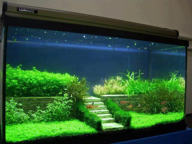 beautiful tank with what I hope are live plants: Aquariums Fish, Planted Tank, Fish Tanks, Fishtanks, Aquarium Ideas, Aquascape, 640 482 Pixels, Fish Tank Idea