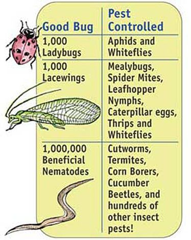 Beneficial Bugs Garden Pack: Beneficial Insects, Beneficial Bugs Garden Pack, Pest Control, Beneficials Garden, Gardening Ideas, Gardens, Garden Bugs, Vegetable Gardening