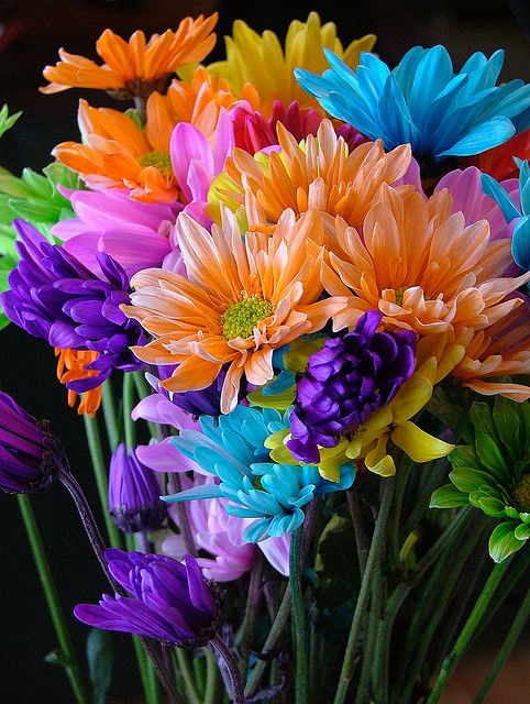 """Bright and Lively... I love """"crazy daisies""""...had a bouquet of these when I was in hospital once!  Brightened the room and everyone commented of them: Colorful Flowers, Beautiful Colors, Beauty Things, Beautiful Flowers, Flowers, Flowers Garden, R"""