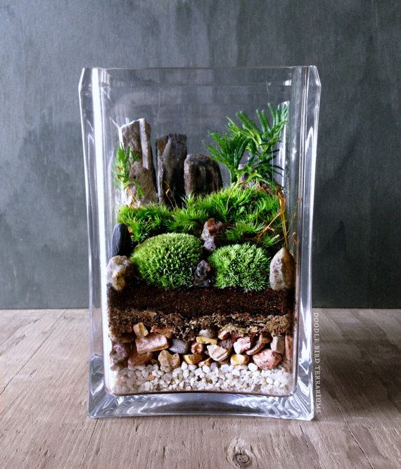 Bring nature indoors with this micro garden landscape. It features mini mounds of moss and palm-tree shaped Selaginella plants with for bonsai-like: Features Mini, Mini Garden, Moss Terrarium, Landscape Terrarium