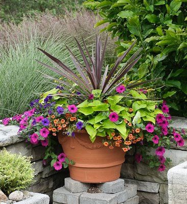 Calibrochia, Wave Petunias, and Sweet Potato Vine Potted Arrangement: Porch Pots, Country Gardener, Gardening Stuff, Gardening Ideas, Front Porches, Container Ideas, Flowers Plants Trees Garden, Container Gardening