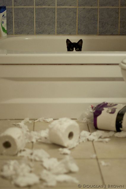 .   ...........click here to find out more     http://googydog.com: Cats, Animals, Kitty Cat, Kitten, Funny Cat, Pet, Crazy Cat, Dog, Toilet Paper