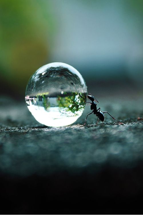 Determination If you want something you've never had,  then you've got to do something you've never done.: Photos, Amazing, Animals, Nature, Ant Pushing, Ants, Water Droplets, Photography