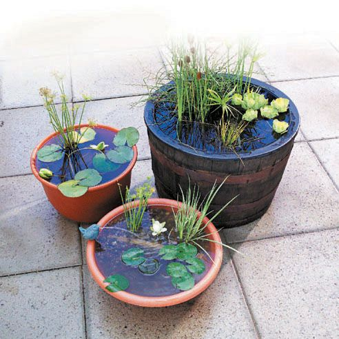 DIY: How To Make A Container Water Garden | The Garden Glove: Container Water Garden, Mini Pond, Garden Ideas, Water Gardens, Water Features, Watergardens, Water Gardening, Outdoor Water