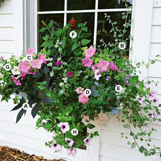 Great Container Gardens If you want to create beautiful container gardens but don't know here to start, check out our slide show of 25 recipes you can follow for success. Our collection of container garden recipes is sure to inspire you.: Garden Conta