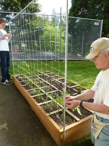 How to build a Tomato or Vegetable Trellis: Garden Ideas, Trellis Structure, Gardening Ideas, Tomato Trellis, Vegetable Trellis, How To Build, Small Garden